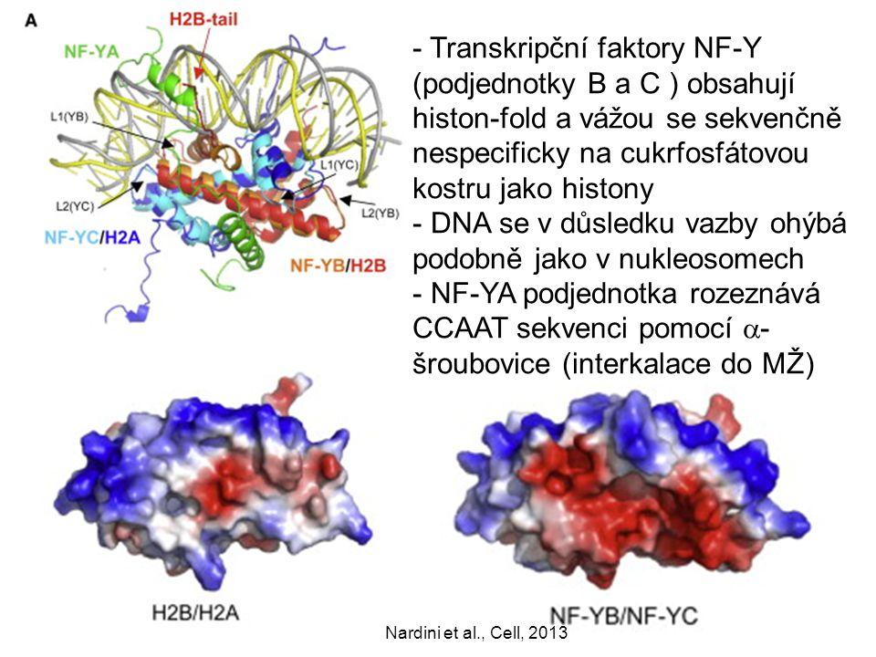 TBP TFIIA TAF1 TAF6/9 - TFIIB (C-konec) váže TBP a 6-7bp up- a downstream od ohybu DNA přes cukrfosfátovou kostru (kolem TATA boxu) TFIIB stéricky nevadí TFIIA (viz později) 1VOL Nikolov et al, Nature, 1995