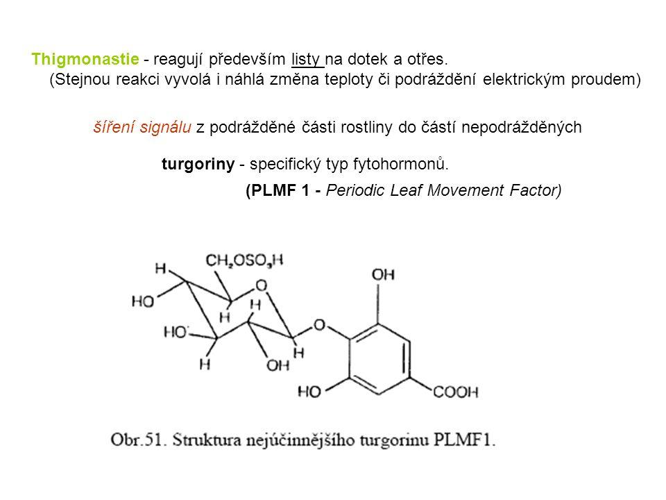 Thigmonastie - reagují především listy na dotek a otřes. (Stejnou reakci vyvolá i náhlá změna teploty či podráždění elektrickým proudem) šíření signál