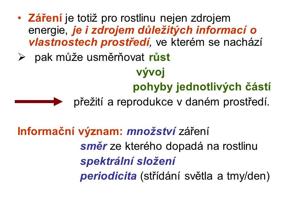 Fotoperiodické závislosti kvetení Jen málo druhů zakládá květy bez vazby na délku fotoperiody (fotoperiodicky neutrální Absolutně krátkodenní druhy: Chryzantéma (Chrysanthemum morifolium, některé kultivary) kukuřice (Zea mays) merlík bíly (Chenopodium album) Kalanchoe (Kalanchoe blossfeldiana) Fakultativně krátkodenní druhy: slunečnice roční (Helianthus annuus) cibule (Alium cepa) sója obecná (Glycine max, některé odrůdy) konopí seté (Cannabis sativa) Absolutně dlouhodenní druhy: ředkvička (Raphanus sativus) špenát (Spinacia oleracea) jetel luční (Trifolium pratense) psárka luční (Alopecurus pratensis) Fakultativně dlouhodenní druhy: salát (Lactuca sativa) řepa (Beta vulgaris) lipnice luční (Poa pratensis) pšenice (Triticum aestivum) Fotoperiodicky neutrální druhy: okurka setá (Cucumis sativus) rajče (Lycopersicon sp.) fazol obecný (Phaseolus vulgaris) bob obecný (Faba vulgaris)