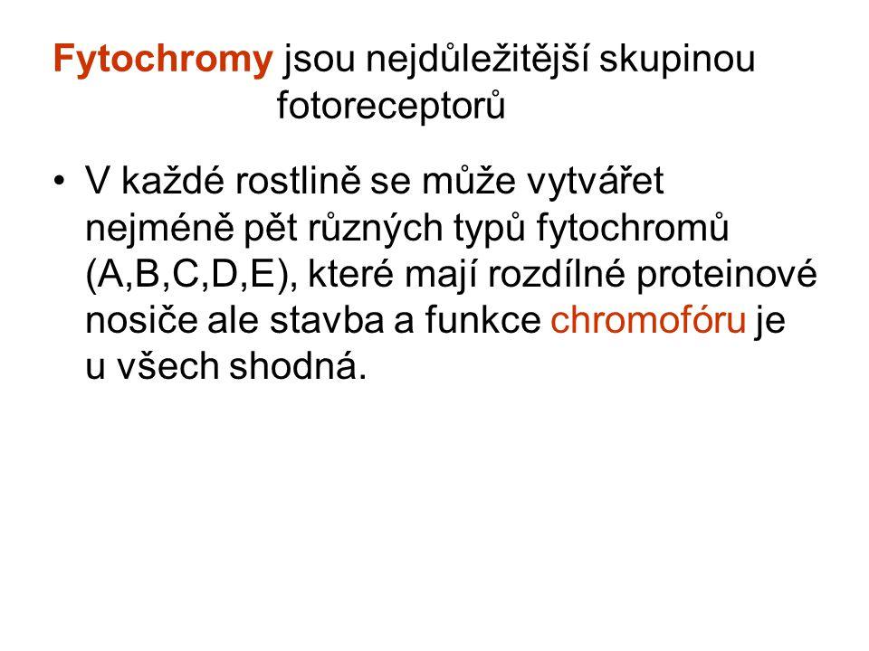 Fytochromy jsou nejdůležitější skupinou fotoreceptorů V každé rostlině se může vytvářet nejméně pět různých typů fytochromů (A,B,C,D,E), které mají rozdílné proteinové nosiče ale stavba a funkce chromofóru je u všech shodná.