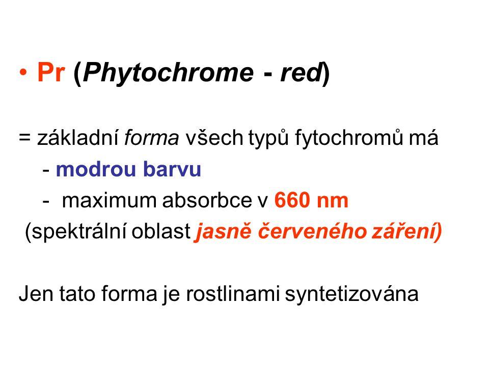 Pr (Phytochrome - red) = základní forma všech typů fytochromů má - modrou barvu - maximum absorbce v 660 nm (spektrální oblast jasně červeného záření) Jen tato forma je rostlinami syntetizována