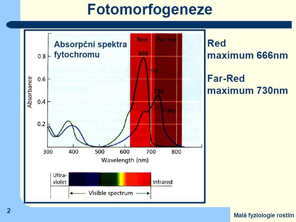 Tropismus směr pohybové reakce závislý na směru působení podnětu Mechanická stránka - spojena s usměrněným růstem buněk Fototropismus je orientovaný pohyb částí rostliny vyvolán působením viditelného záření - zakřivování stonku směrem ke zdroji záření - pohyby listů a květů v závislosti na poloze slunce na obloze Diafototropismus - naklánění listů vzhledem k poloze slunce na obloze v průběhu dne - maximalizovat příjem sluneční energie Gravitropismus - úloha amyloplastů jako statolitů