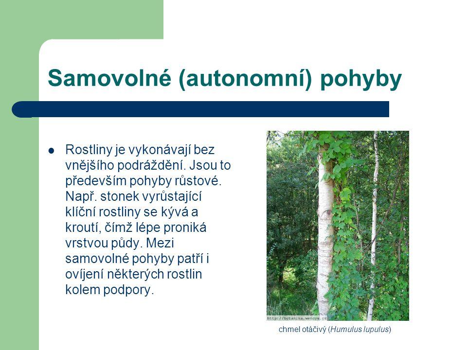 Samovolné (autonomní) pohyby Rostliny je vykonávají bez vnějšího podráždění. Jsou to především pohyby růstové. Např. stonek vyrůstající klíční rostlin