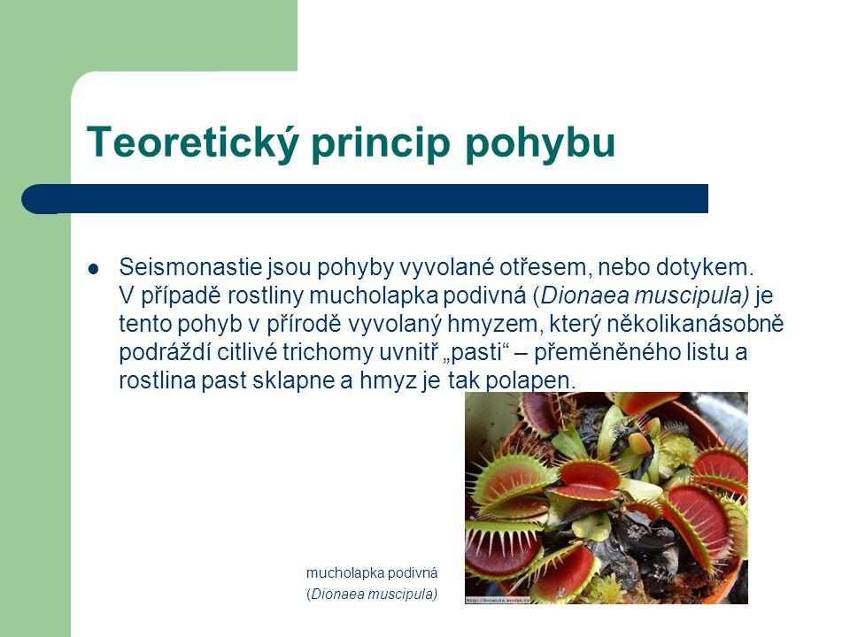 Teoretický princip pohybu V případě rostliny citlivka stydlivá (Mimosa pudica) dochází ke sklápění lístků.