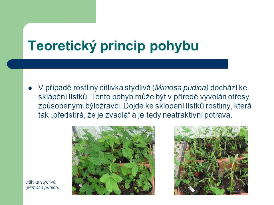 Teoretický princip pohybu V případě rostliny citlivka stydlivá (Mimosa pudica) dochází ke sklápění lístků. Tento pohyb může být v přírodě vyvolán otře