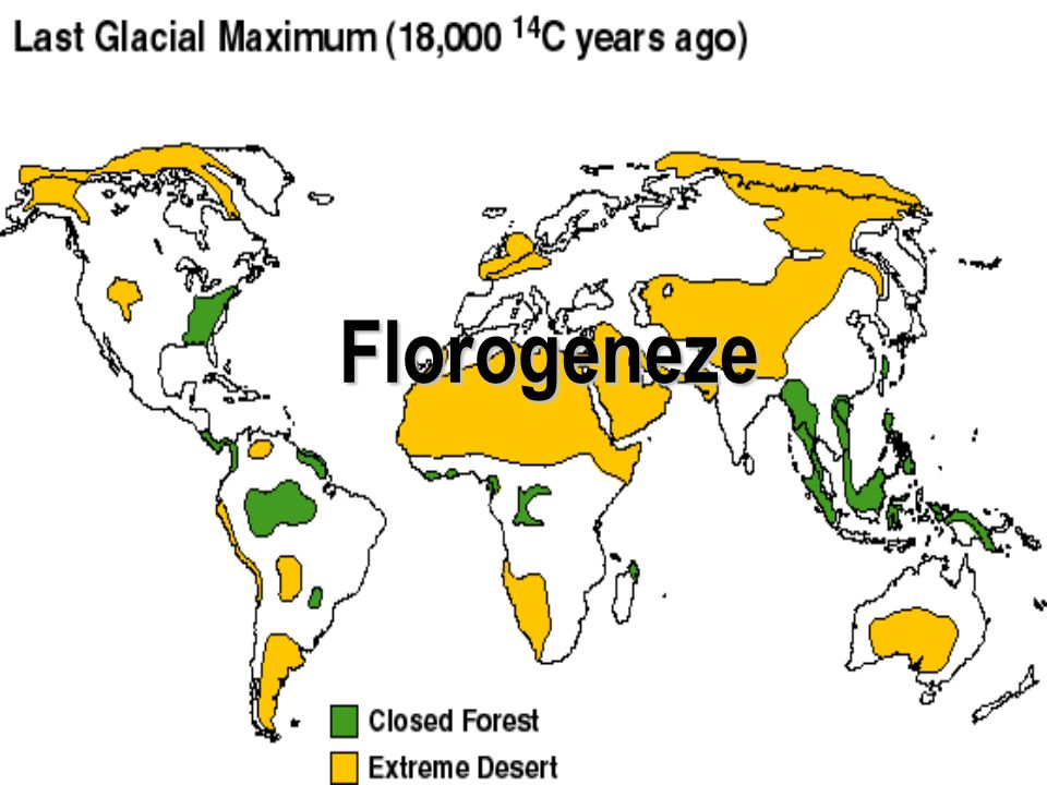 Florogeneze