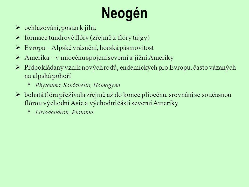 Neogén  ochlazování, posun k jihu  formace tundrové flóry (zřejmě z flóry tajgy)  Evropa – Alpské vrásnění, horská pásmovitost  Amerika – v miocén