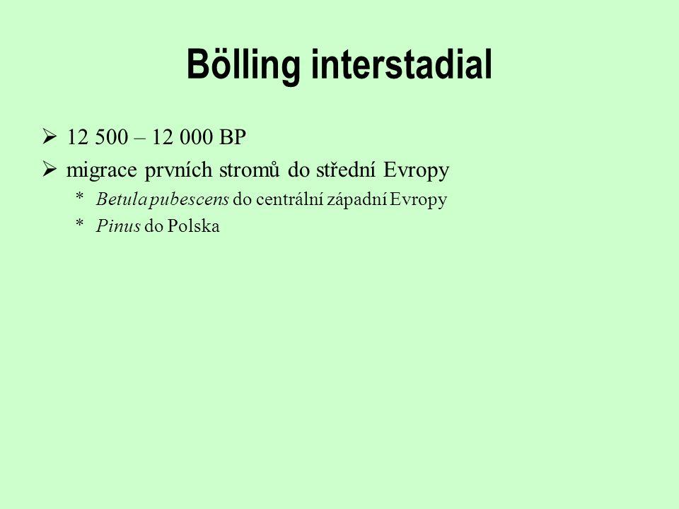 Bölling interstadial  12 500 – 12 000 BP  migrace prvních stromů do střední Evropy *Betula pubescens do centrální západní Evropy *Pinus do Polska