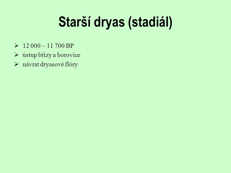 Starší dryas (stadiál)  12 000 – 11 700 BP  ústup břízy a borovice  návrat dryasové flóry
