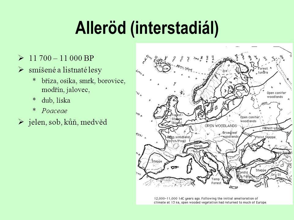 Alleröd (interstadiál)  11 700 – 11 000 BP  smíšené a listnaté lesy *bříza, osika, smrk, borovice, modřín, jalovec, *dub, líska *Poaceae  jelen, so