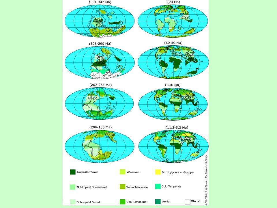 Paleofytikum  od vzniku cévnatých rostlin (420 mil.) v siluru po začátek svrchního permu (ca 260 mil.)  dominance výtrusných rostlin