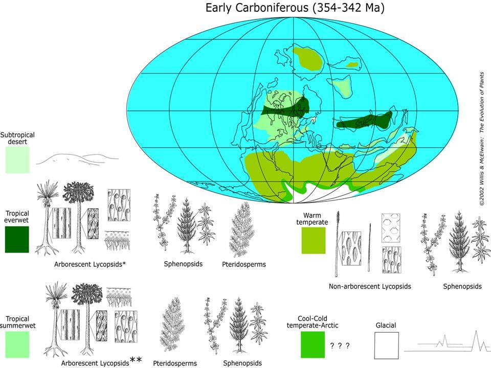 Neogén  ochlazování, posun k jihu  formace tundrové flóry (zřejmě z flóry tajgy)  Evropa – Alpské vrásnění, horská pásmovitost  Amerika – v miocénu spojení severní a jižní Ameriky  Přdpokládaný vznik nových rodů, endemických pro Evropu, často vázaných na alpská pohoří *Phyteuma, Soldanella, Homogyne  bohatá flóra přežívala zřejmě až do konce pliocénu, srovnání se současnou flórou východní Asie a východní části severní Ameriky *Liriodendron, Platanus