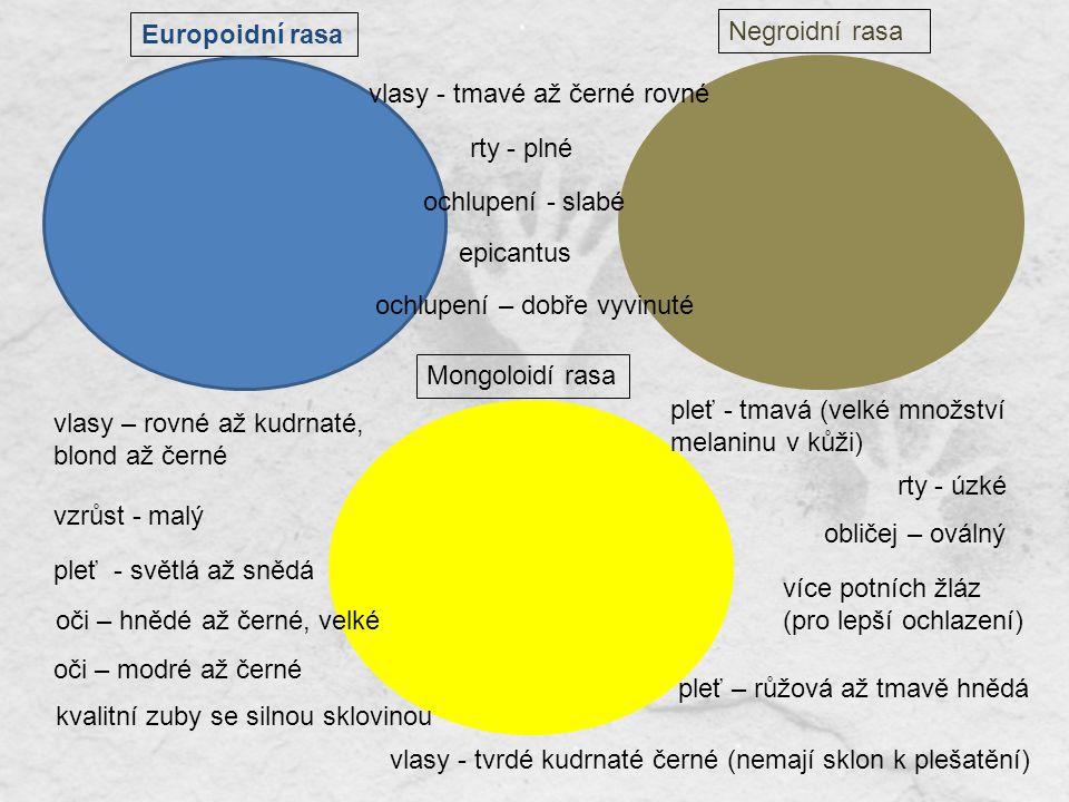 Europoidní rasa Mongoloidí rasa Negroidní rasa rty - plné vlasy - tmavé až černé rovné ochlupení - slabé vlasy – rovné až kudrnaté, blond až černé pleť - světlá až snědá epicantus vzrůst - malý více potních žláz (pro lepší ochlazení) rty - úzké kvalitní zuby se silnou sklovinou oči – hnědé až černé, velké vlasy - tvrdé kudrnaté černé (nemají sklon k plešatění) pleť - tmavá (velké množství melaninu v kůži) ochlupení – dobře vyvinuté obličej – oválný pleť – růžová až tmavě hnědá oči – modré až černé ochlupení slabé