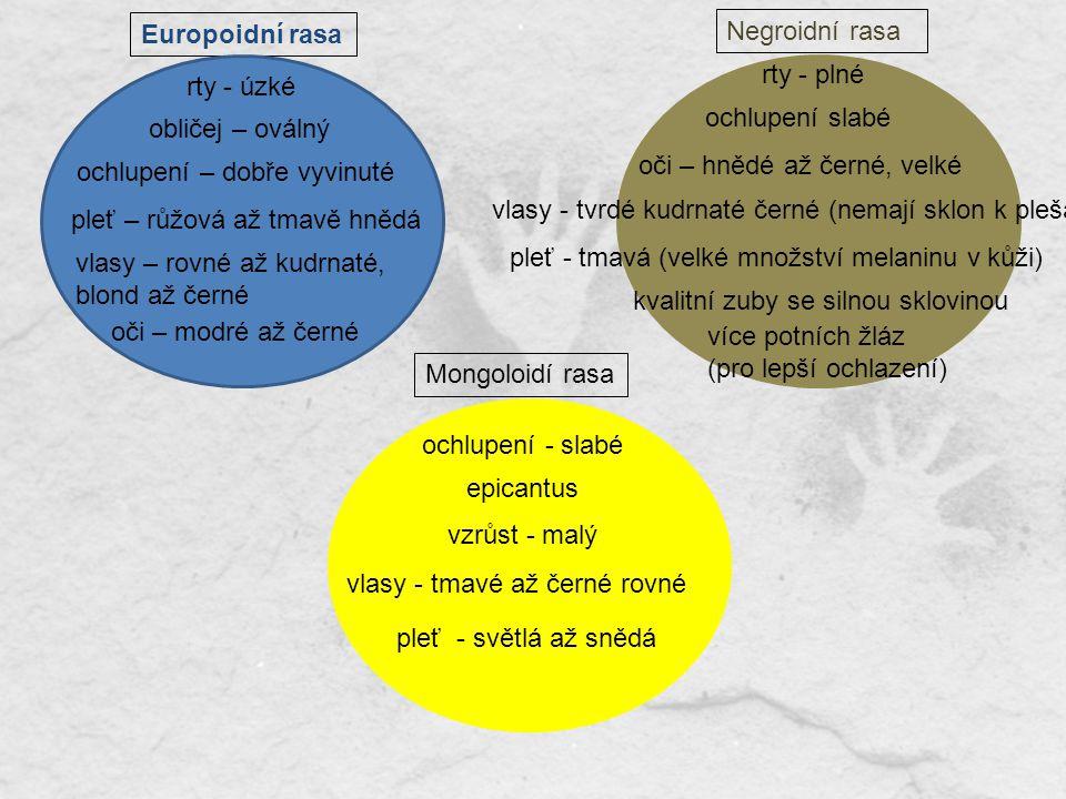 Europoidní rasa Mongoloidí rasa Negroidní rasa rty - plné vlasy - tmavé až černé rovné ochlupení - slabé vlasy – rovné až kudrnaté, blond až černé ple