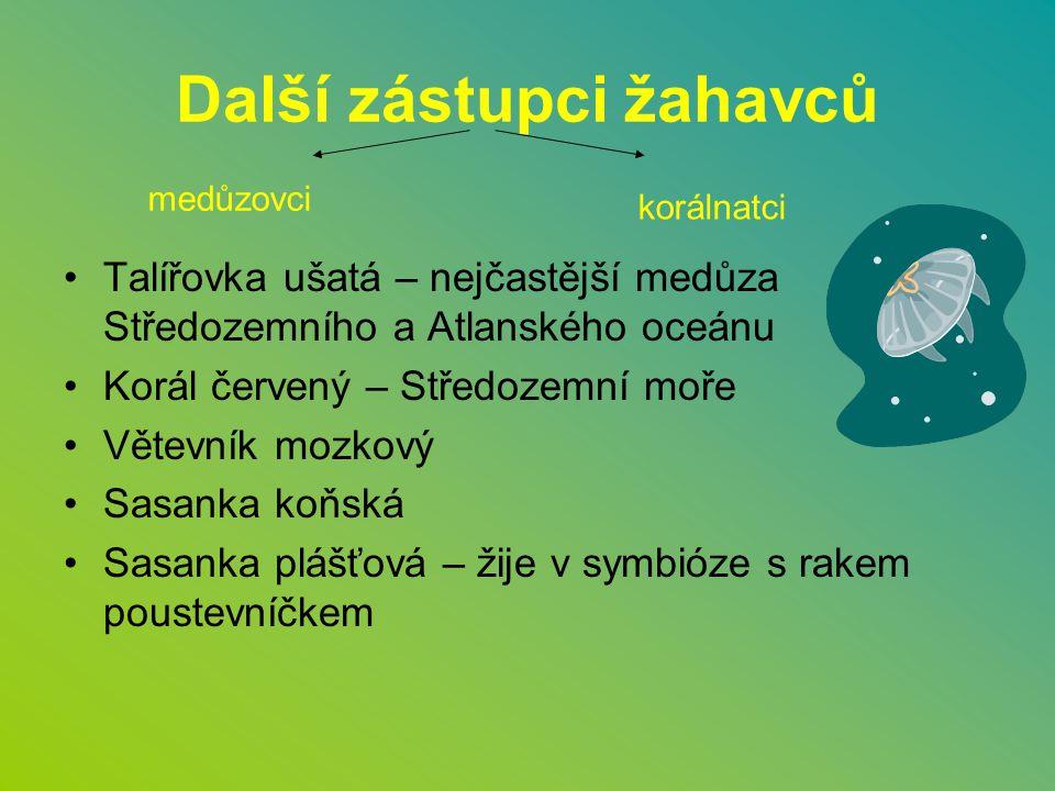 Další zástupci žahavců Talířovka ušatá – nejčastější medůza Středozemního a Atlanského oceánu Korál červený – Středozemní moře Větevník mozkový Sasank