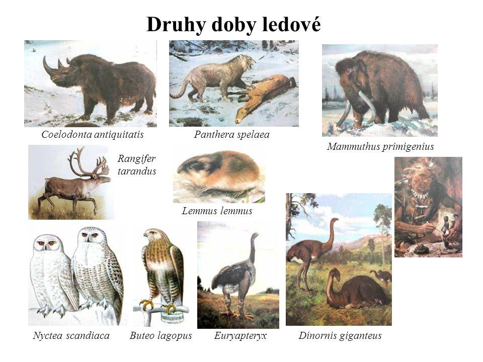 Druhy doby ledové Dinornis giganteusButeo lagopusEuryapteryx Coelodonta antiquitatisPanthera spelaea Nyctea scandiaca Lemmus lemmus Mammuthus primigenius Rangifer tarandus