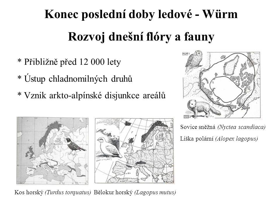 Konec poslední doby ledové - Würm Rozvoj dnešní flóry a fauny * Přibližně před 12 000 lety * Ústup chladnomilných druhů * Vznik arkto-alpínské disjunkce areálů Kos horský (Turdus torquatus)Bělokur horský (Lagopus mutus) Sovice sněžná (Nyctea scandiaca) Liška polární (Alopex lagopus)