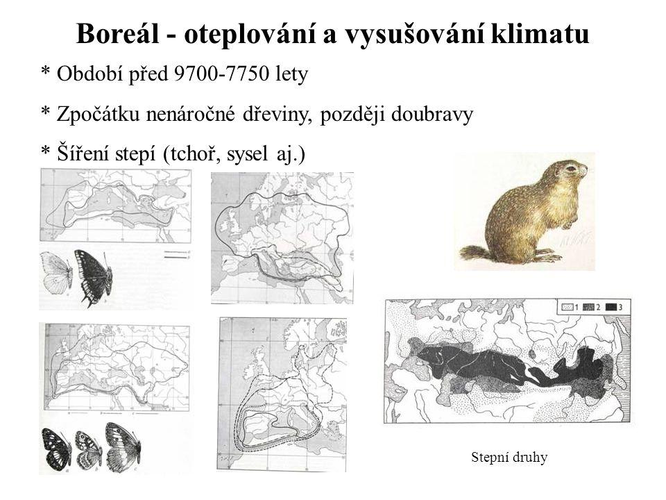 Boreál - oteplování a vysušování klimatu * Období před 9700-7750 lety * Zpočátku nenáročné dřeviny, později doubravy * Šíření stepí (tchoř, sysel aj.) Stepní druhy