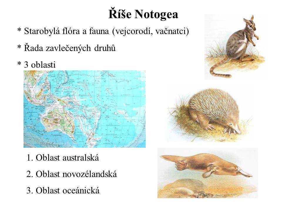 Říše Notogea * Starobylá flóra a fauna (vejcorodí, vačnatci) * Řada zavlečených druhů * 3 oblasti 1.