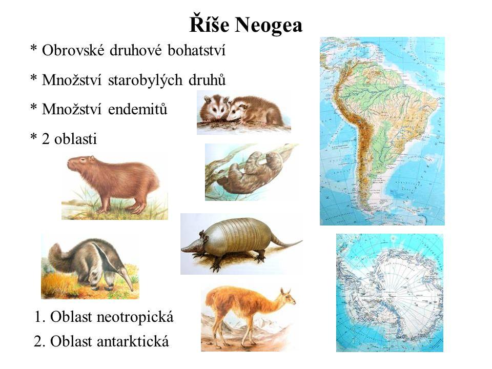 Říše Neogea * Obrovské druhové bohatství * Množství starobylých druhů * Množství endemitů * 2 oblasti 1.