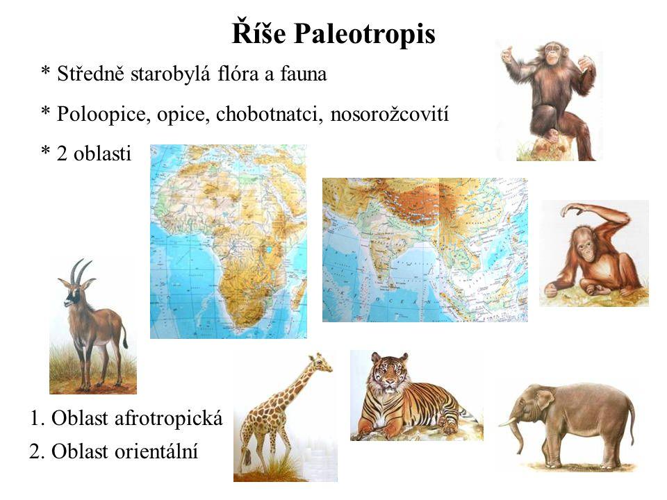 Říše Paleotropis * Středně starobylá flóra a fauna * Poloopice, opice, chobotnatci, nosorožcovití * 2 oblasti 1.