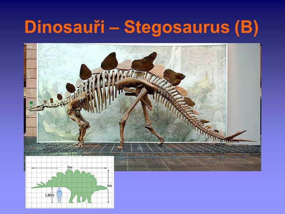 Dinosauři – Stegosaurus (B)
