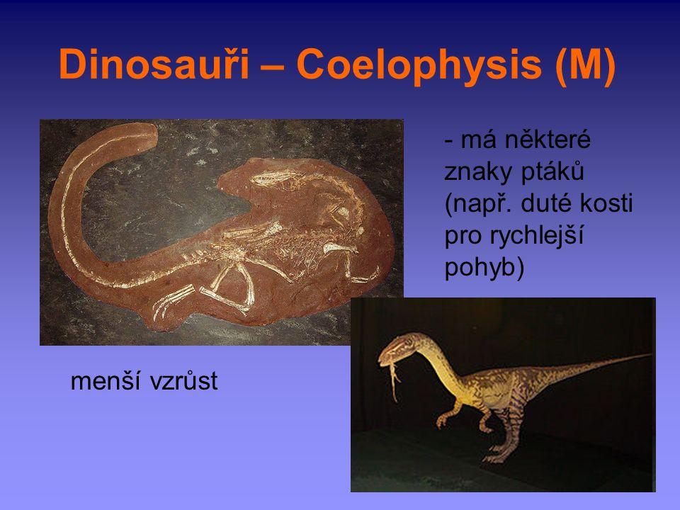 Dinosauři – Coelophysis (M) - má některé znaky ptáků (např. duté kosti pro rychlejší pohyb) menší vzrůst