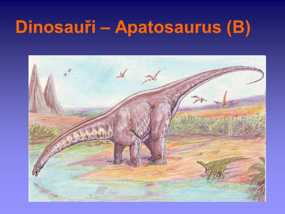 Dinosauři – Apatosaurus (B)