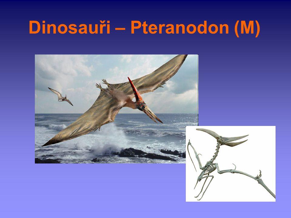 Dinosauři – Pteranodon (M)