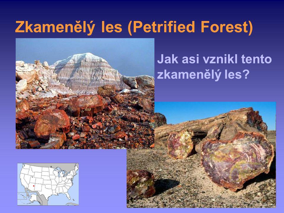 Zkamenělý les (Petrified Forest) Jak asi vznikl tento zkamenělý les?