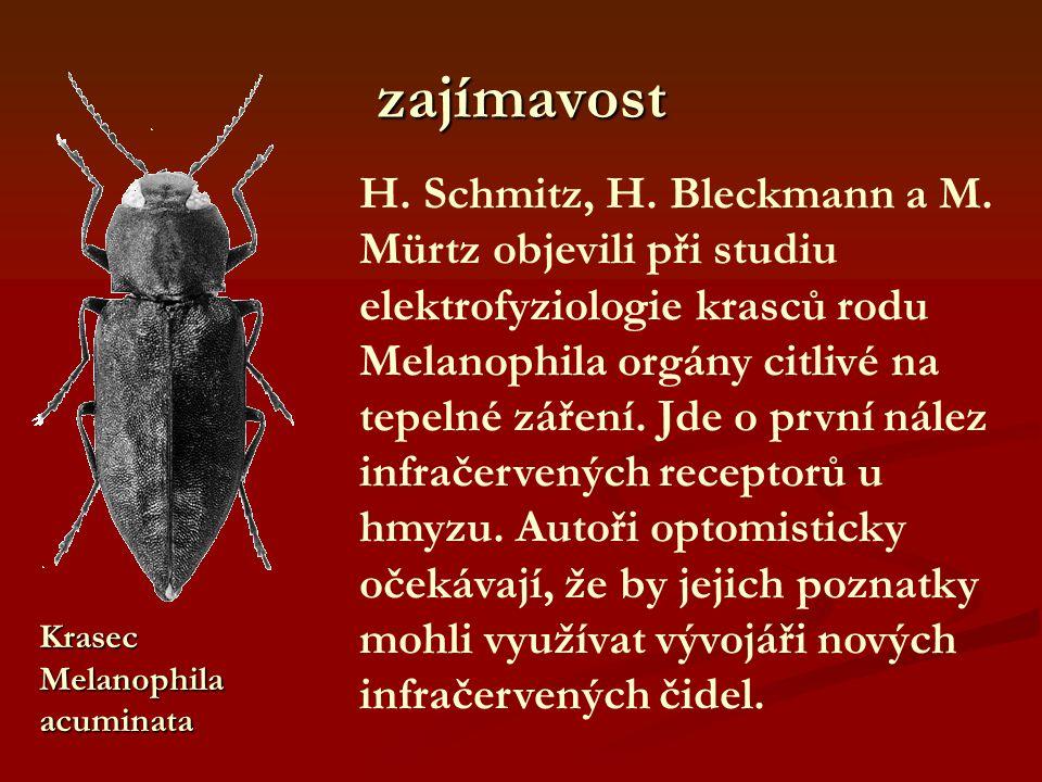 zajímavost H. Schmitz, H. Bleckmann a M. Mürtz objevili při studiu elektrofyziologie krasců rodu Melanophila orgány citlivé na tepelné záření. Jde o p