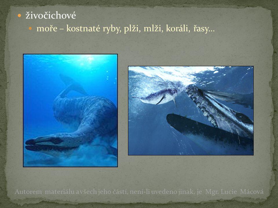 živočichové moře – kostnaté ryby, plži, mlži, koráli, řasy… Autorem materiálu a všech jeho částí, není-li uvedeno jinak, je Mgr. Lucie Mácová