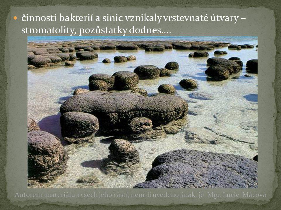 činností bakterií a sinic vznikaly vrstevnaté útvary – stromatolity, pozůstatky dodnes.... Autorem materiálu a všech jeho částí, není-li uvedeno jinak