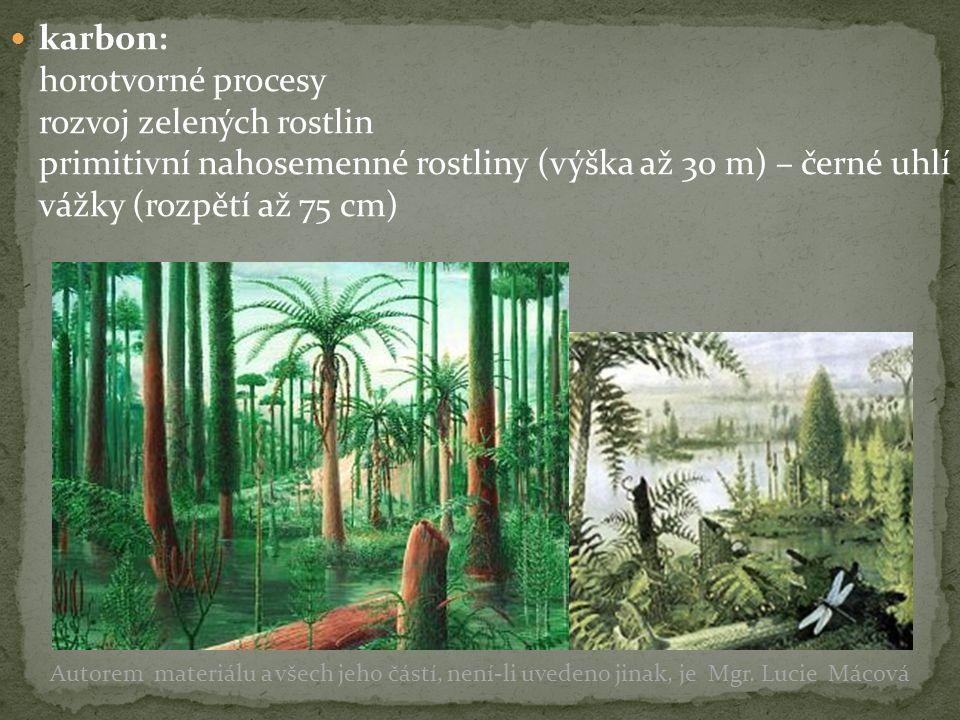 karbon: horotvorné procesy rozvoj zelených rostlin primitivní nahosemenné rostliny (výška až 30 m) – černé uhlí vážky (rozpětí až 75 cm) Autorem mater