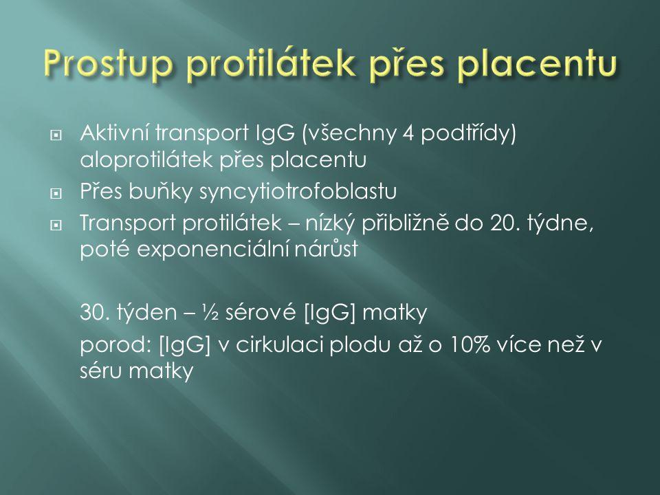 Aktivní transport IgG (všechny 4 podtřídy) aloprotilátek přes placentu  Přes buňky syncytiotrofoblastu  Transport protilátek – nízký přibližně do