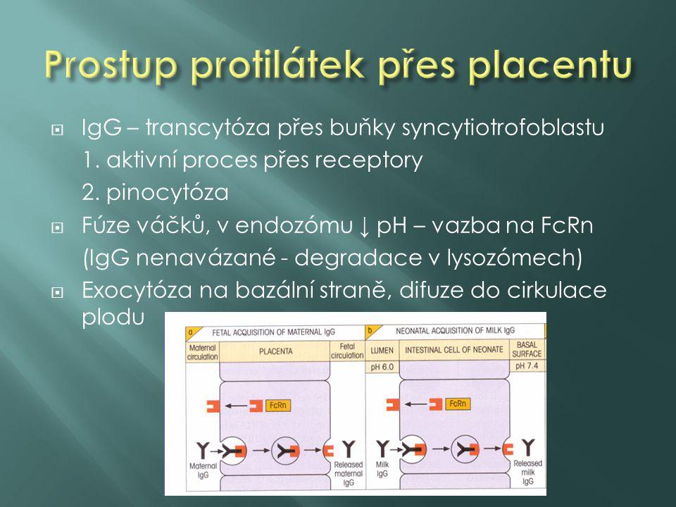  IgG – transcytóza přes buňky syncytiotrofoblastu 1. aktivní proces přes receptory 2. pinocytóza  Fúze váčků, v endozómu ↓ pH – vazba na FcRn (IgG n