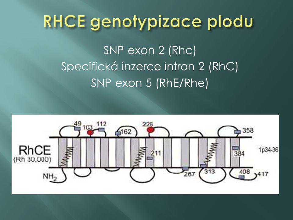 SNP exon 2 (Rhc) Specifická inzerce intron 2 (RhC) SNP exon 5 (RhE/Rhe)