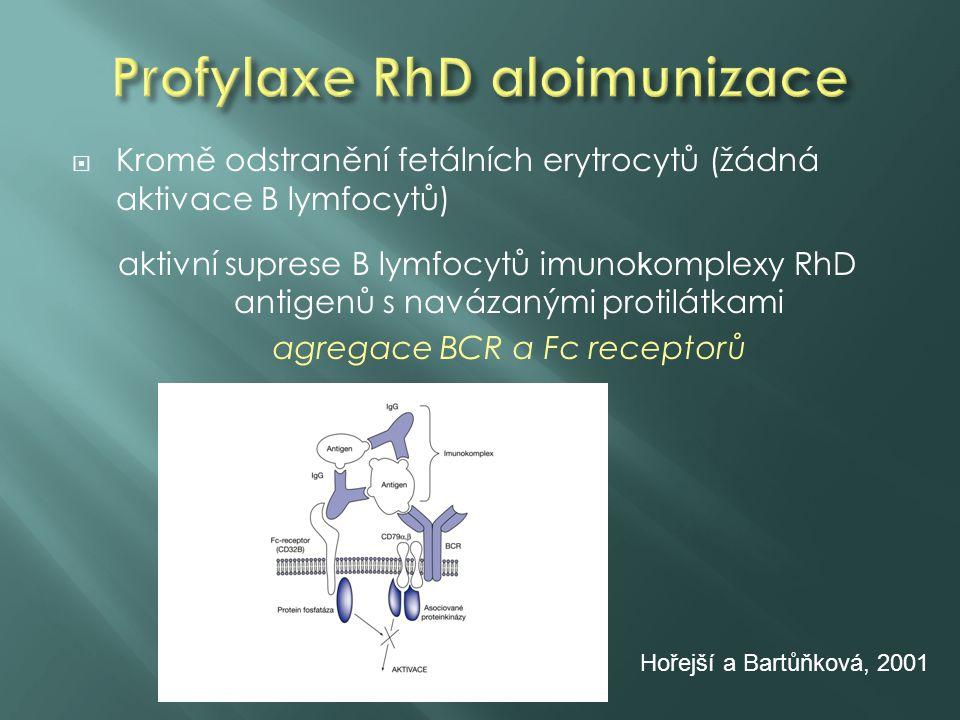  Kromě odstranění fetálních erytrocytů (žádná aktivace B lymfocytů) aktivní suprese B lymfocytů imuno k omplexy RhD antigenů s navázanými protilátkam