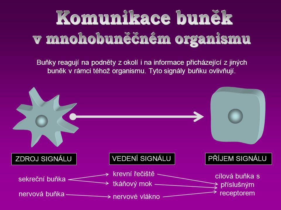 Buňky reagují na podněty z okolí i na informace přicházející z jiných buněk v rámci téhož organismu.