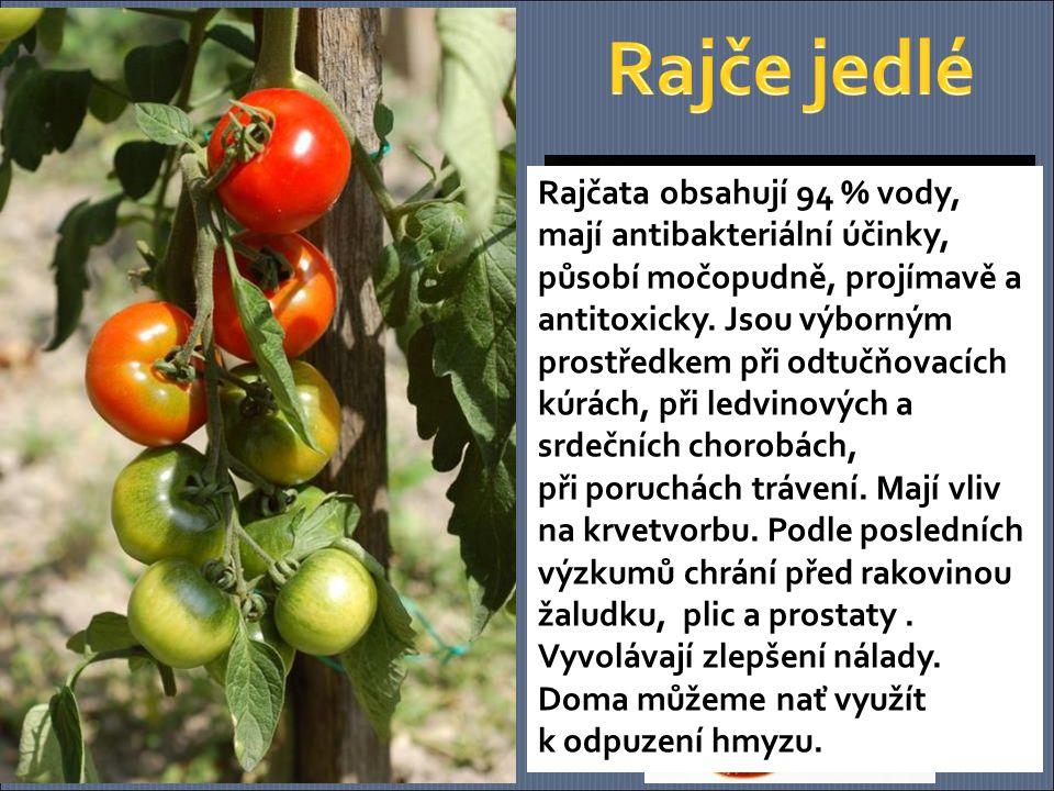 Rajčata obsahují 94 % vody, mají antibakteriální účinky, působí močopudně, projímavě a antitoxicky.
