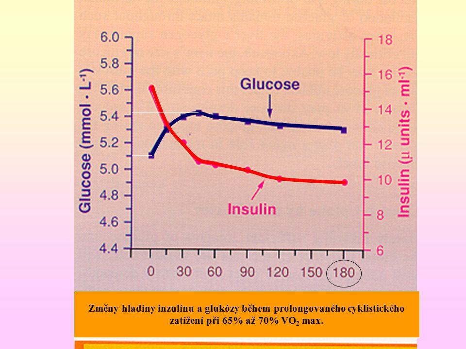 Změny hladiny inzulínu a glukózy během prolongovaného cyklistického zatížení při 65% až 70% VO 2 max.