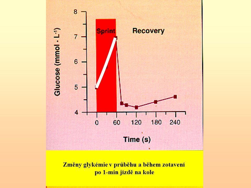 """Tělesná práce Příčina """"odmítnutí (""""nevyužití ) glukózy - svaly mají svůj (svalový) glykogen Zvýšená glykémie v průběhu zotavení klesá (vstup glukózy do svalů a vytváření svalového glykogenu)"""