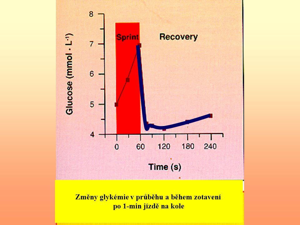 Tělesná práce V průběhu několikahodinové práce se jaterní glykogenolýza řídí potřebami svalů a glykémie se nemění nebo pouze mírně stoupá nad klidovou hladinu.