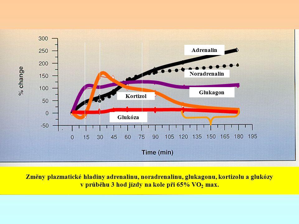 Změny plazmatické hladiny adrenalinu, noradrenalinu, glukagonu, kortizolu a glukózy v průběhu 3 hod jízdy na kole při 65% VO 2 max. Adrenalin Noradren