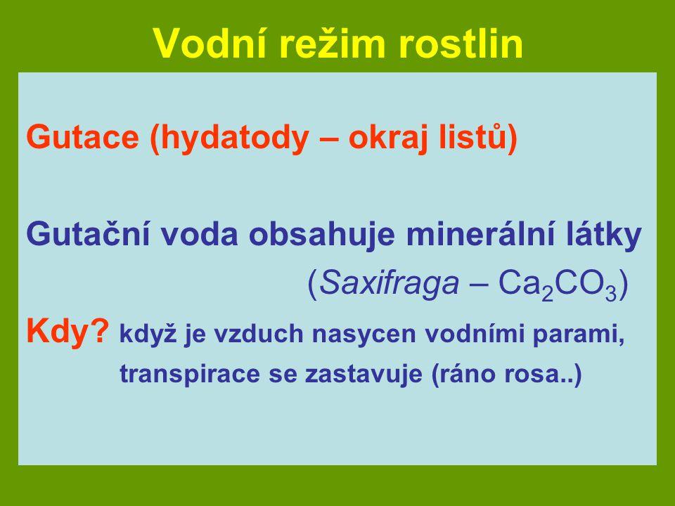 Vodní režim rostlin Gutace (hydatody – okraj listů) Gutační voda obsahuje minerální látky (Saxifraga – Ca 2 CO 3 ) Kdy? když je vzduch nasycen vodními