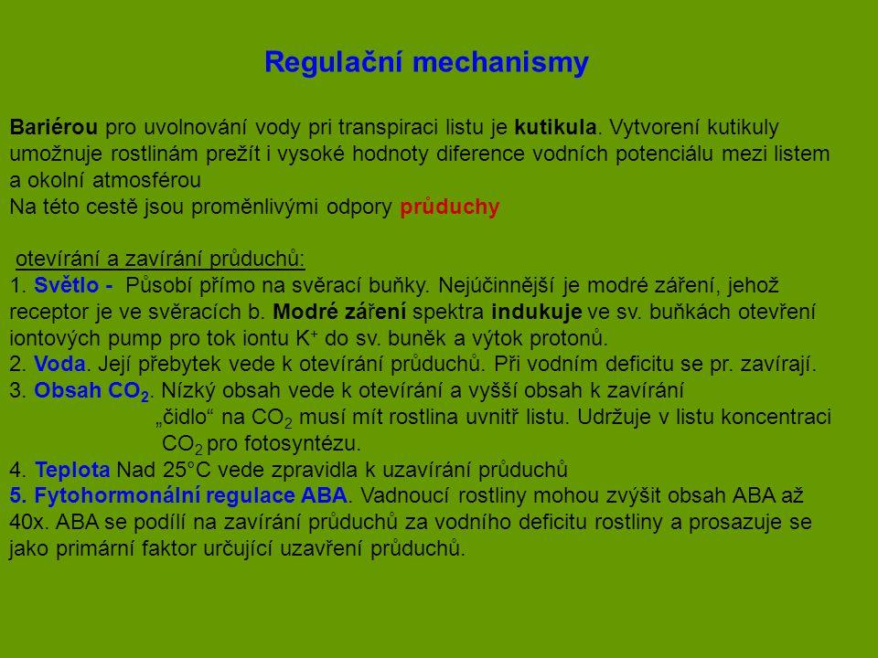Regulační mechanismy Bariérou pro uvolnování vody pri transpiraci listu je kutikula. Vytvorení kutikuly umožnuje rostlinám prežít i vysoké hodnoty dif