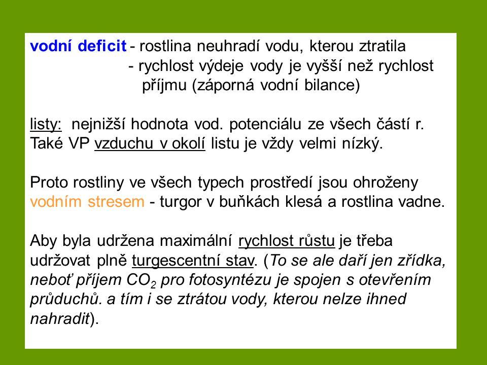 vodní deficit - rostlina neuhradí vodu, kterou ztratila - rychlost výdeje vody je vyšší než rychlost příjmu (záporná vodní bilance) listy: nejnižší ho