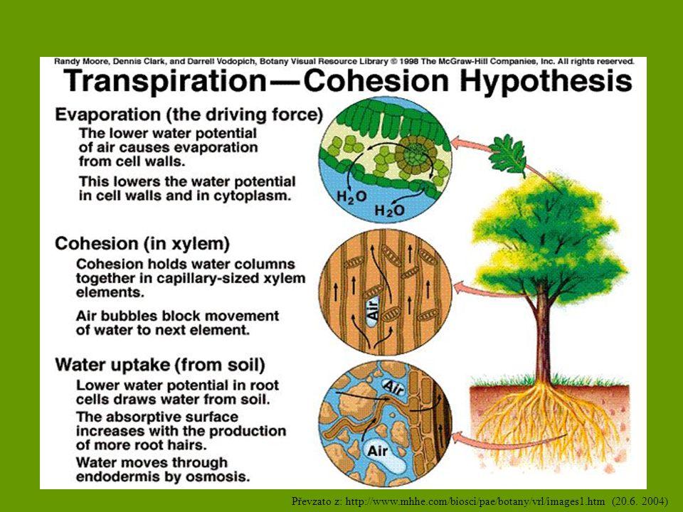 Vodní režim rostlin Vodní bilance Vyrovnaná v.bilance: příjem = výdej.