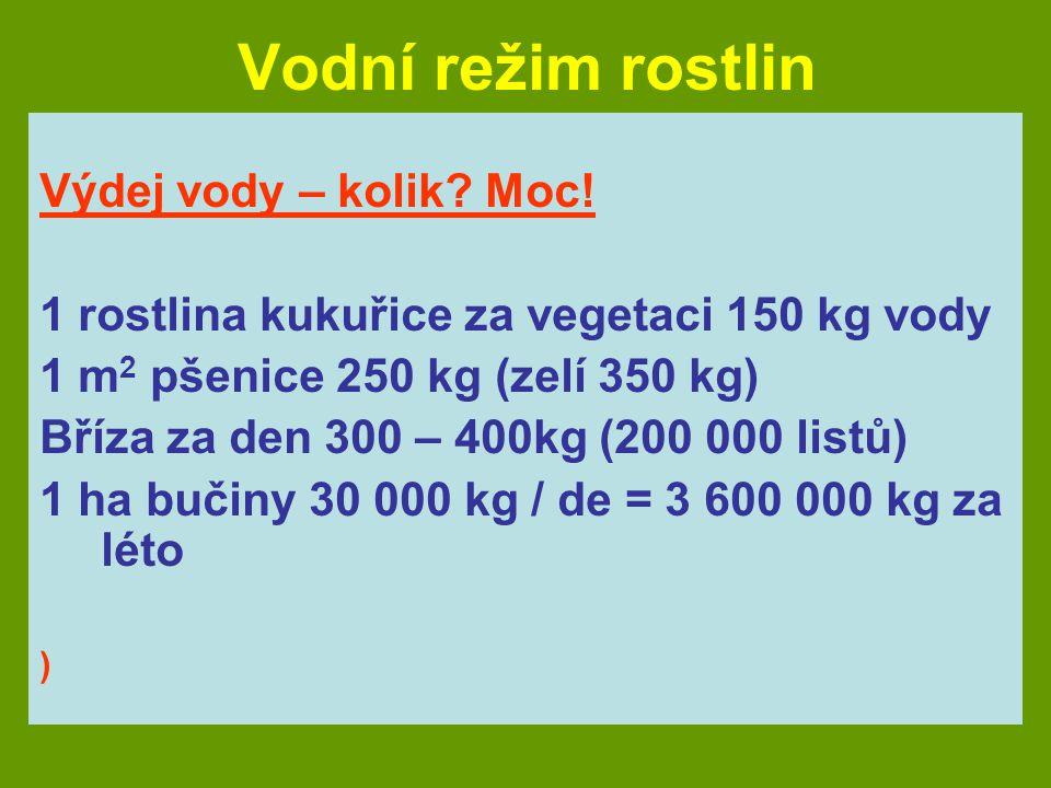 Vodní režim rostlin Výdej vody – kolik? Moc! 1 rostlina kukuřice za vegetaci 150 kg vody 1 m 2 pšenice 250 kg (zelí 350 kg) Bříza za den 300 – 400kg (