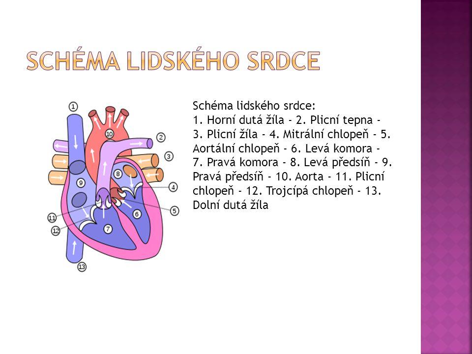 Schéma lidského srdce: 1. Horní dutá žíla - 2. Plicní tepna - 3. Plicní žíla - 4. Mitrální chlopeň - 5. Aortální chlopeň - 6. Levá komora - 7. Pravá k